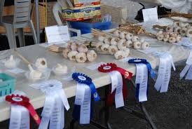 garlic contest