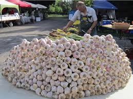 mountain of garlic